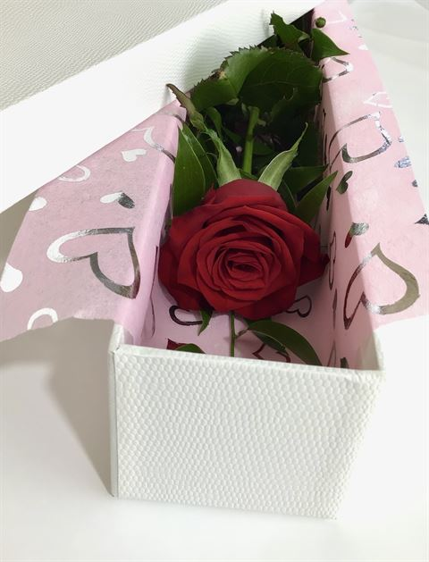 Boxed Rose -Valentines Day